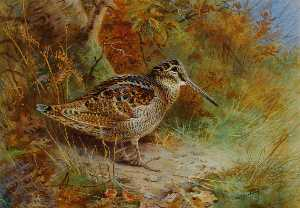 Archibald Thorburn - Un Woodcock