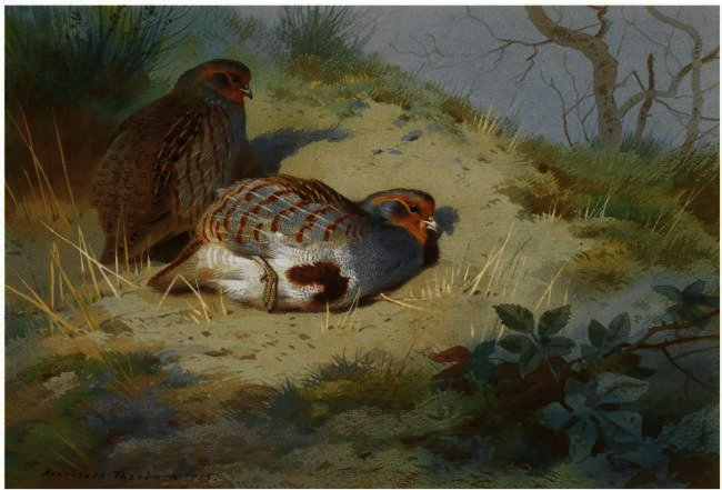 Un par de perdices en un banco de arena, acuarela de Archibald Thorburn (1860-1935, United Kingdom)