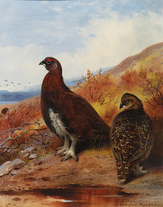 Archibald Thorburn - un par de red grouse en el Wat..