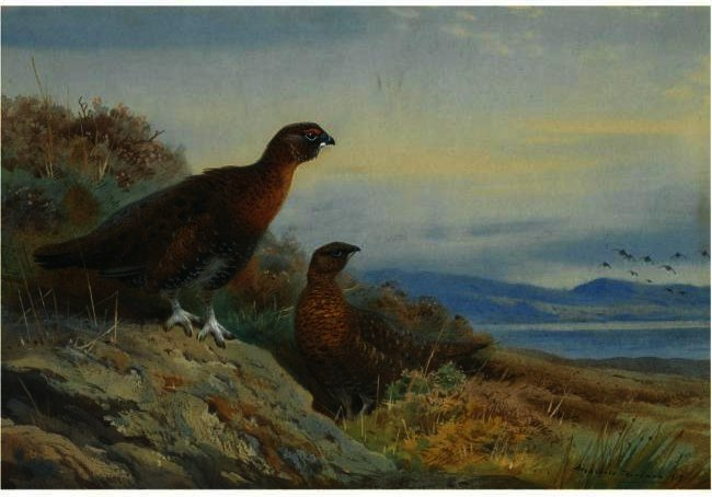 Brace De Grouse, acuarela de Archibald Thorburn (1860-1935, United Kingdom)