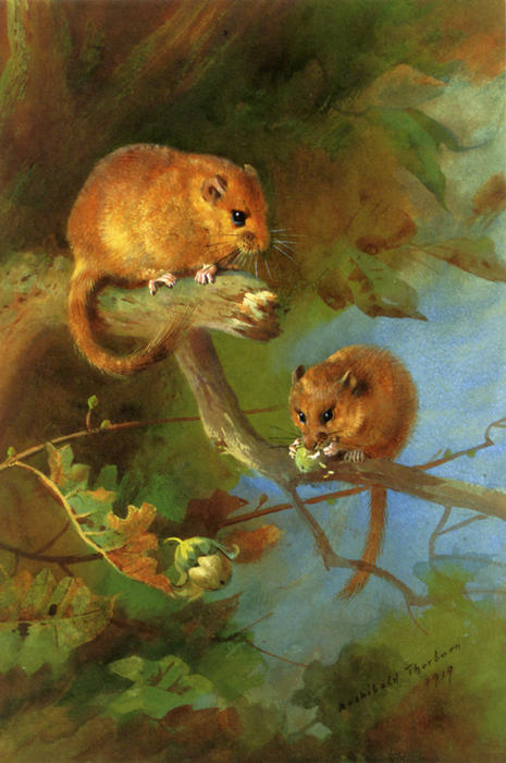 Lirones, acuarela de Archibald Thorburn (1860-1935, United Kingdom)