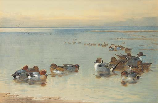 Trullo y Widgeon, acuarela de Archibald Thorburn (1860-1935, United Kingdom)