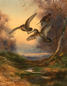 Archibald Thorburn - Sunset Woodcock Roding A