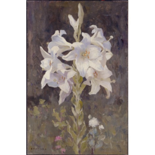 Lillies, dibujo de Eanger Irving Couse (1866-1936, United States)