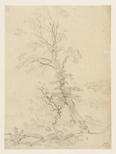 estudio de a árbol de Paul Sandby (1798-1863, United Kingdom)