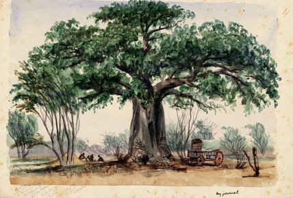 Covered Wagon y Hombres Un Baobab grande de Thomas Baines (1820-1875, United Kingdom)