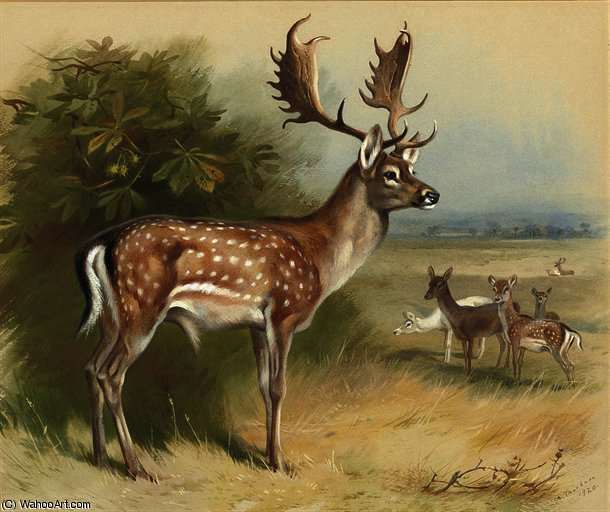 Ciervos en barbecho de Archibald Thorburn (1860-1935, United Kingdom)