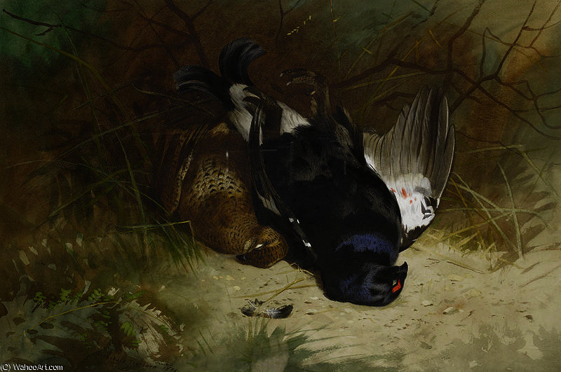Sigue la vida de un par de blackgame de Archibald Thorburn (1860-1935, United Kingdom)