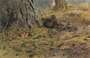 George Edward Lodge - Un capercailie gallina con su ..