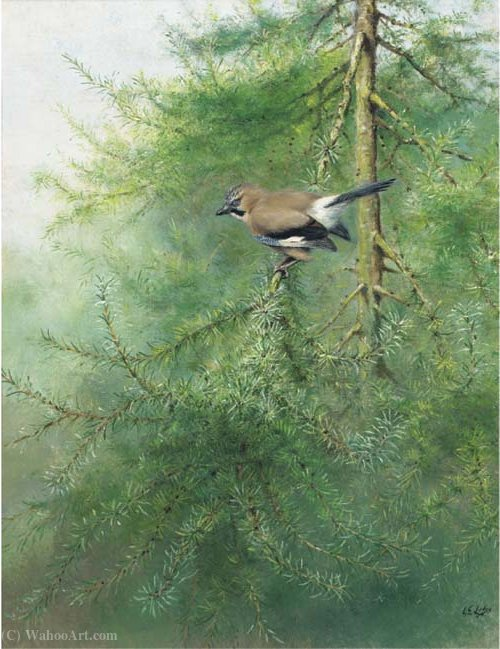Un jay en una rama de George Edward Lodge (1860-1954, United Kingdom)