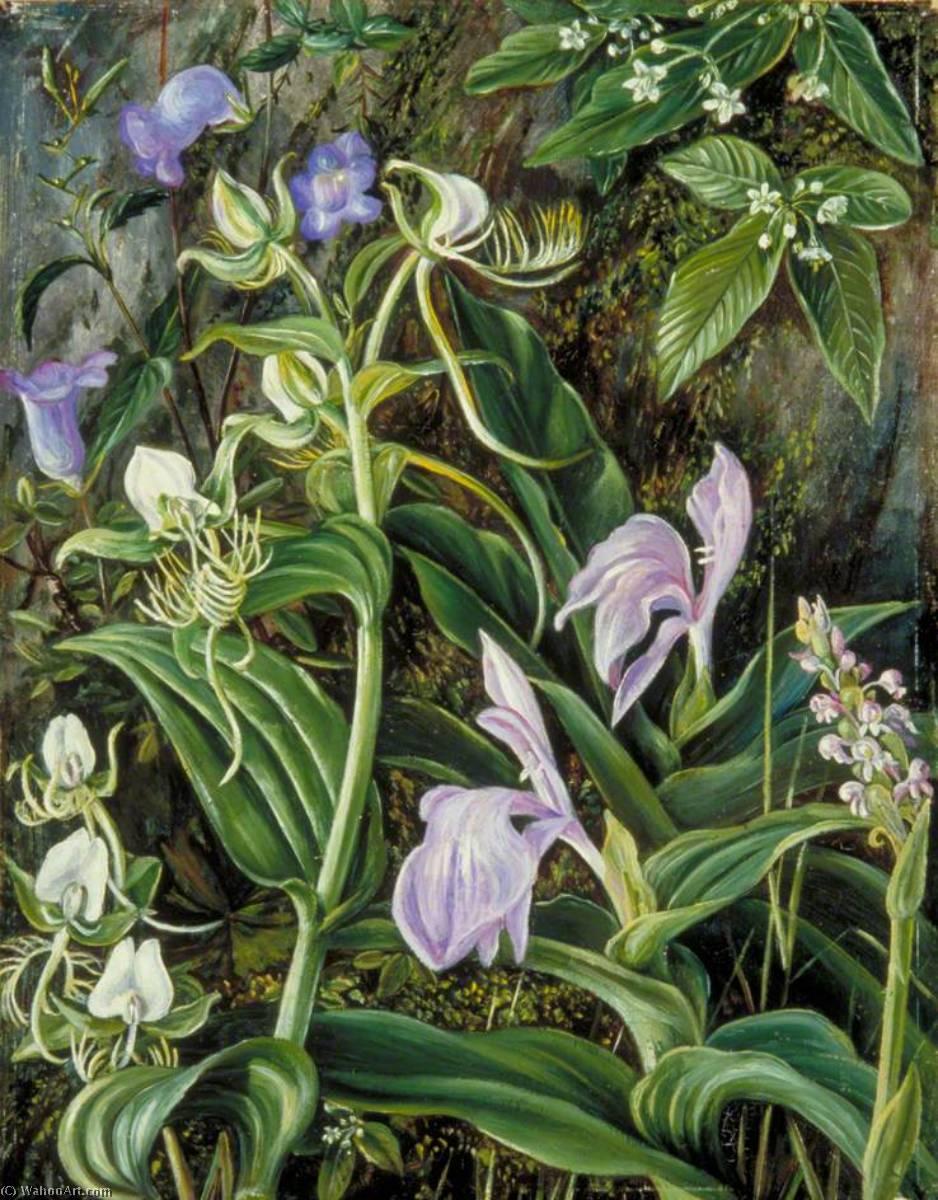flores salvajes de kumaon , La india, 1878 de Marianne North (1830-1890, United Kingdom) | Reproducciones De Pinturas Marianne North | ArtsDot.com